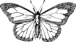 butterflies coloring pages 3