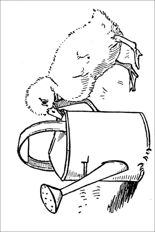 Coloring Now Blog Archive Duck Coloring Pages